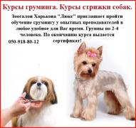 Courses grooming. Dog grooming courses