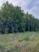 Sold land in S. Pilipovic, Borodyansky R-n